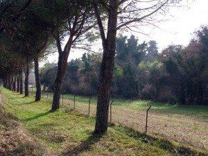 boschetto_ricci_5-300x225
