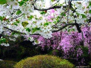 foto_primavera_7012-300x225