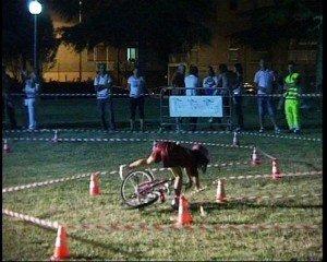 Ciclismo-2011-2-300x240