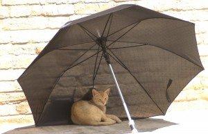 1_gatto-300x193