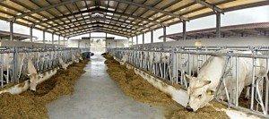 Azienda-agricola-Morica-3-300x133