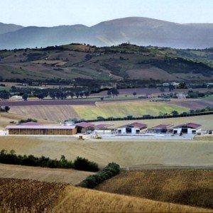 Azienda-agricola-Morica