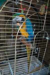 pappagalloarturo_01641-199x300