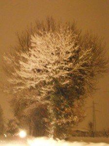 Neve-a-Caldarola-foto-di-Valentina-Gregori-2-224x300