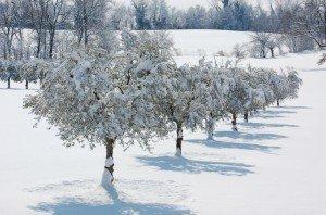 Neve-a-Mogliano-foto-di-Patrizio-Astolfi-1-300x198