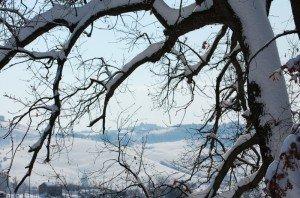 Neve-a-Mogliano-foto-di-Patrizio-Astolfi-2-300x198