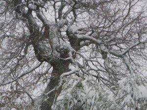 Neve-a-Morrovalle-foto-di-Lodovico-Campetella-4-300x225