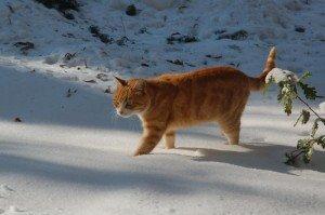 Neve-a-Tolentino-foto-di-Francesca-Brandi-11-300x199