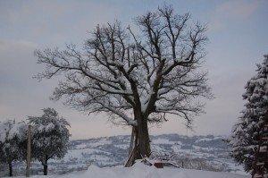 Neve-a-Tolentino-foto-di-Francesca-Brandi-21-300x199