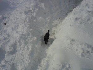 Neve-ad-Appignano-foto-di-Alessandra-Mancinelli-5-300x225