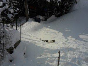 Neve-ad-Appignano-foto-di-Alessandra-Mancinelli-6-300x225