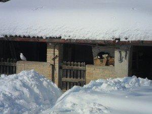 Neve-ad-Appignano-foto-di-Alessandra-Mancinelli-8-300x225