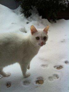 Neve-gatto-mimì-Anna-Chiara-2-224x300