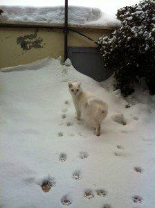 Neve-gatto-mimì-Anna-Chiara