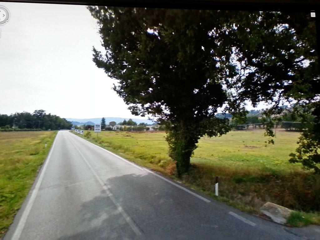 La quercia lungo la SP 361 (immagine ricavata da Google earth)