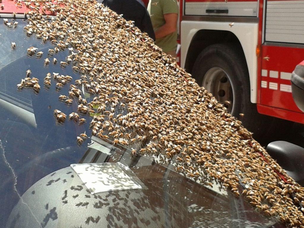 Le api sul parabrezza dell'auto
