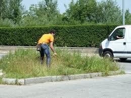 taglio erba alta comune macerata