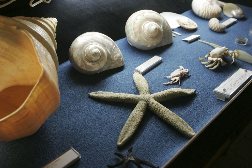 Museo_scienze_naturali_HK0E5815