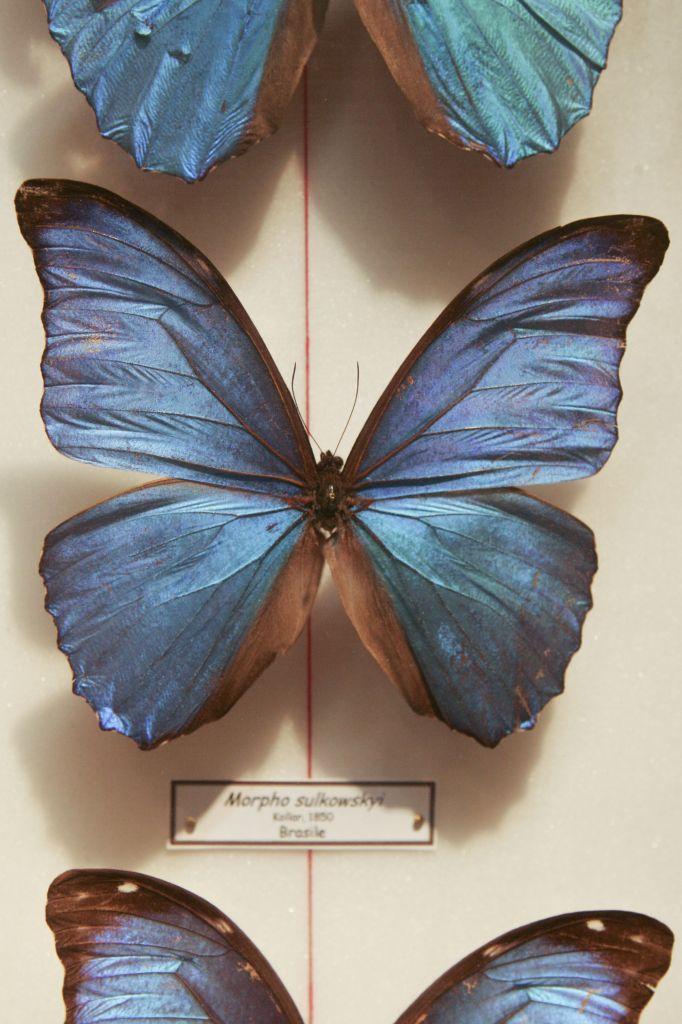 Museo_scienze_naturali_HK0E5844