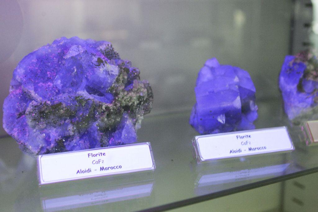 Museo_scienze_naturali_HK0E5868