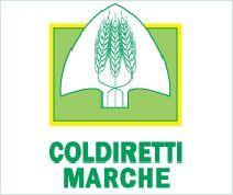coldiretti marche