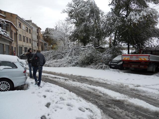 corridonia neve novembre 2013 albero abbattuto porta Molino giorgio rapanelli (1)
