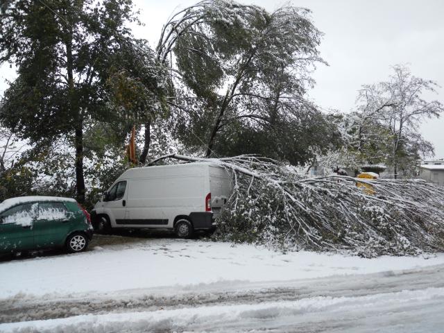 Corridonia,  albero abbattuto a porta Molino, Giorgio Rapanelli