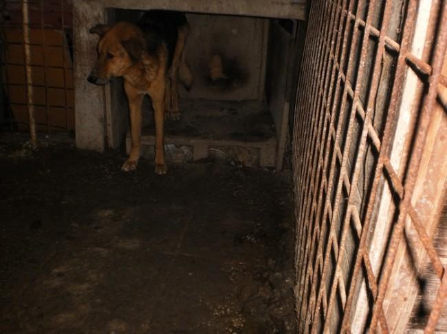 Il cane fotografato a Villa Musone