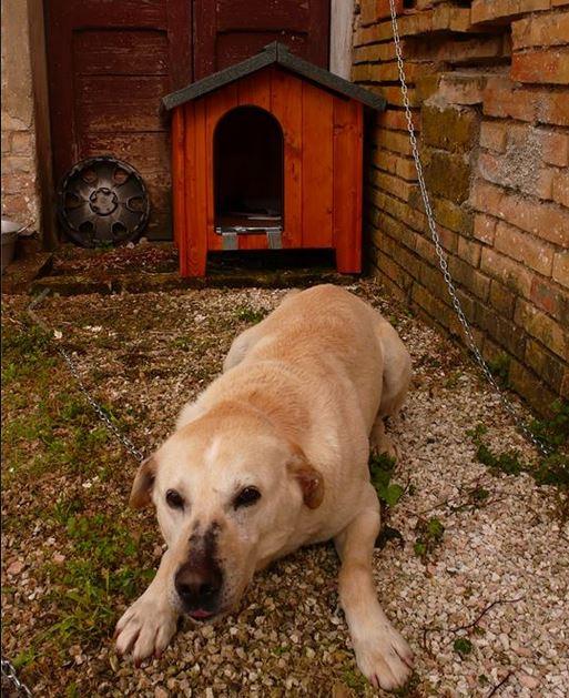 Il cane Gino