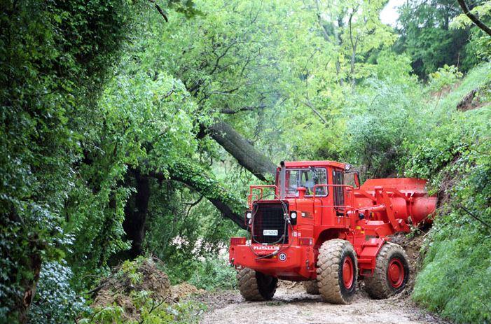 I due alberi caduti a Colbuccaro