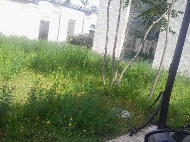 Erba_alta_cimitero (1)