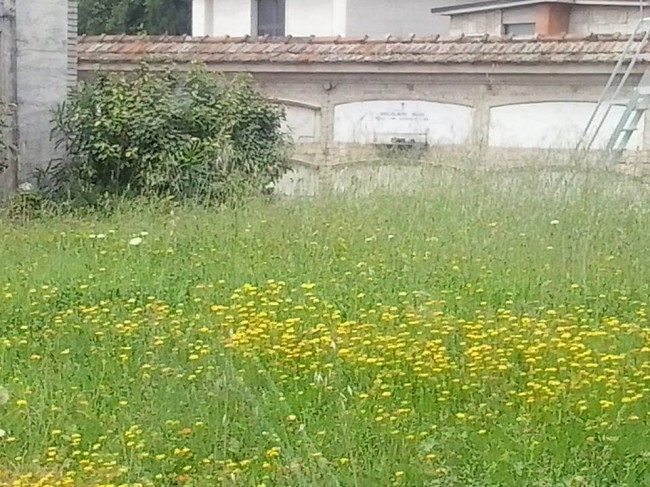 Erba_alta_cimitero (5)