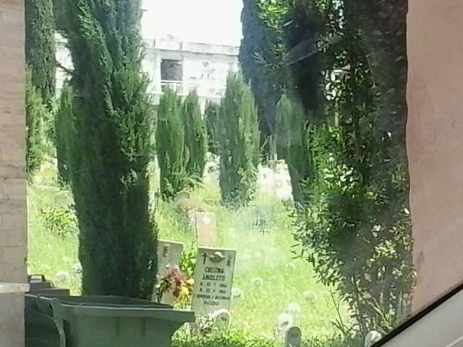 L'erba alta che ricopre le tombe al cimitero di Macerata