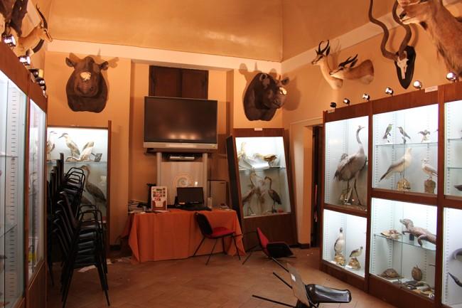 I due trofei di rinoceronte mutilati dai ladri