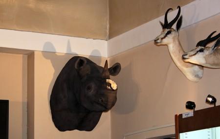 furto museo storia naturale (3)