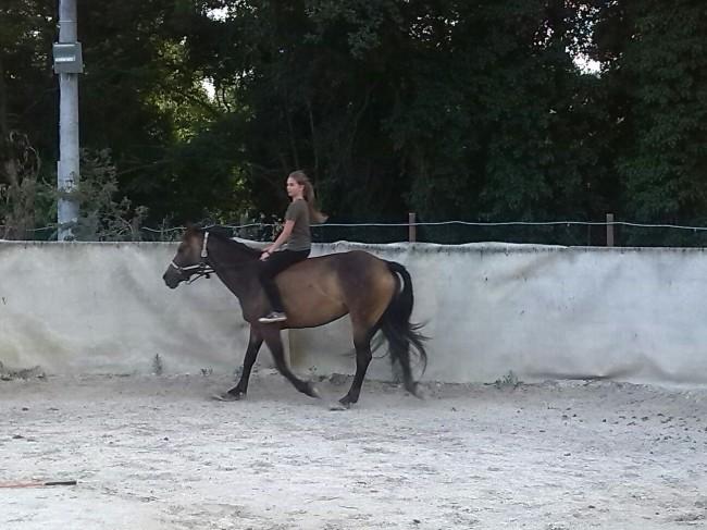 Cavallo disperso a Monte Cavallo