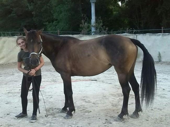 cavallo scappato monte cavallo 2