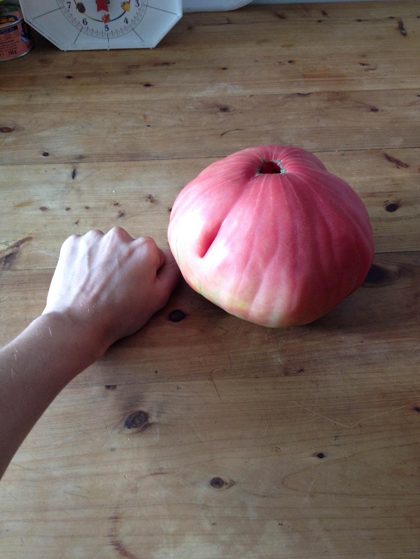 pomodoro  mogliano (1)