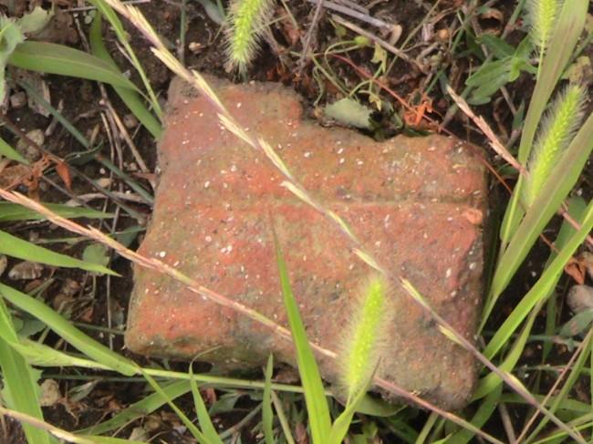 Materiale fittile probabilmente piceno su un terreno proprietà di Coneroblu. Le parti bianche sono innesti di conchiglia