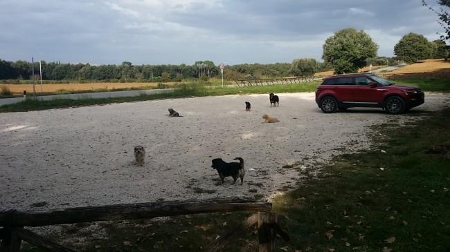 LA SEGNALAZIONE - Il parcheggio dell'Abbadia di Fiastra con i cani randagi