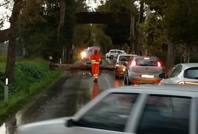 urbisaglia  albero caduto strada 2
