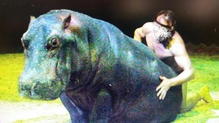 L'ippopotamo Aisha in uno spettacolo del circo Orfei