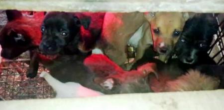 I cuccioli ritrovati dalla forestale