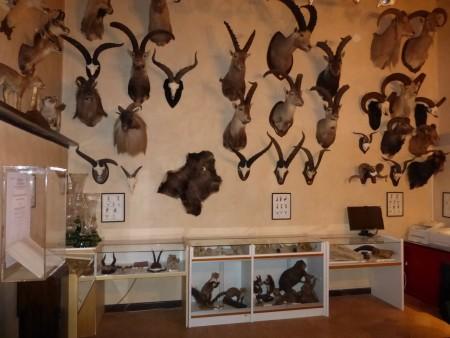 museo-di-storia-naturale-6-450x338