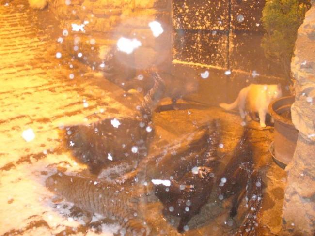 neve a caldarola