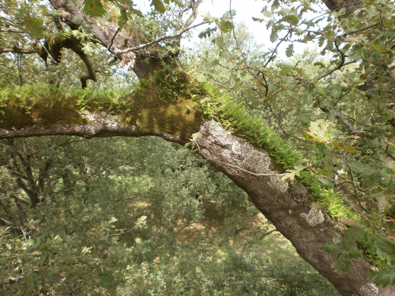 mr green, quercia, ottavio mozzoni (11)