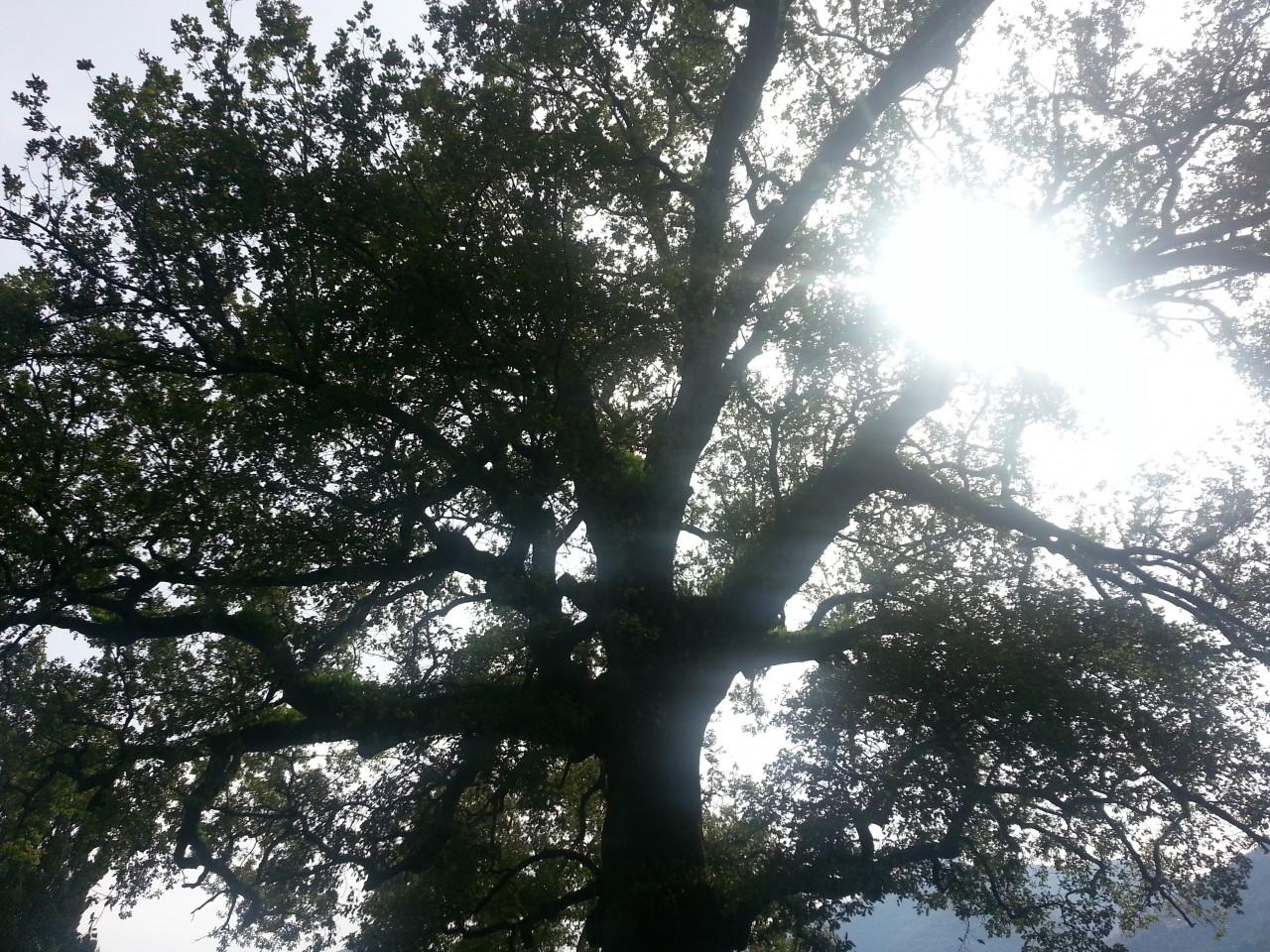 mr green, quercia, ottavio mozzoni (2)