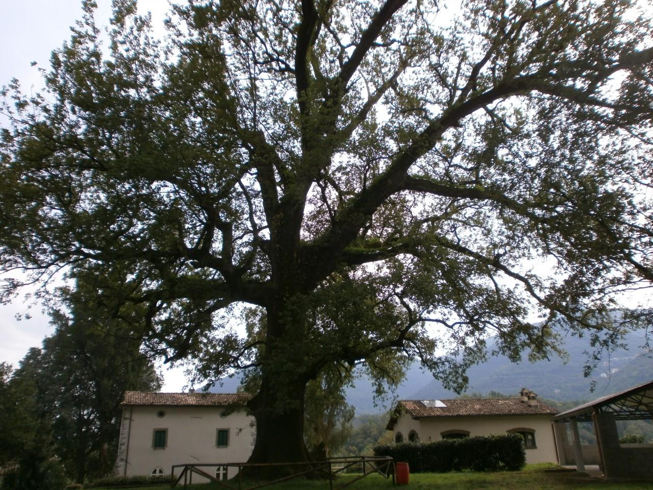 mr green, quercia, ottavio mozzoni (20)
