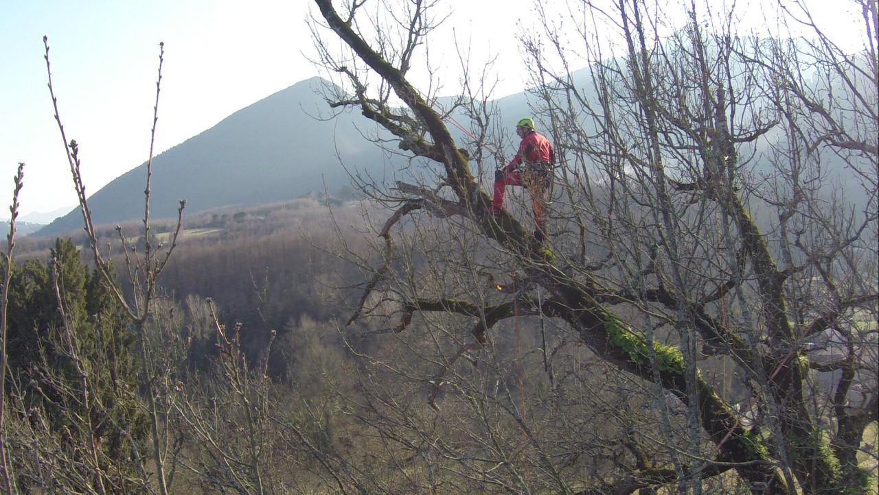 mr green, quercia, ottavio mozzoni (40)