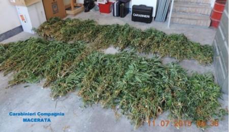 cannabis-pollenza-1-450x260